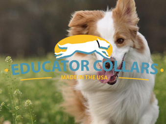 Educator Collars